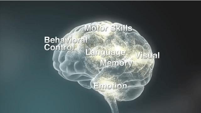 Cervello diviso nelle varie aree di competenza