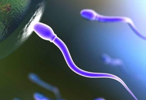 guardare la tv riduce la fertilità maschile