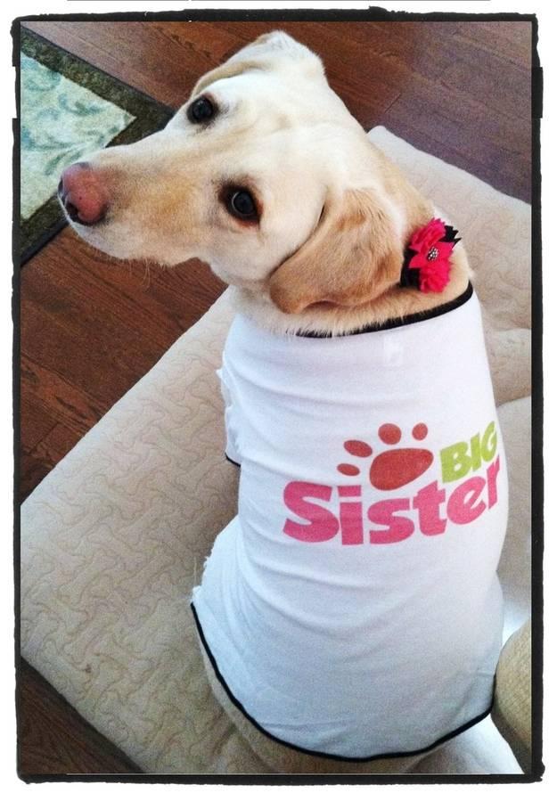 """cane con maglietta """"sorella maggiore"""""""