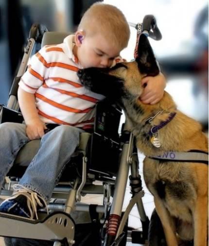 bimbo con handicap bacia cane