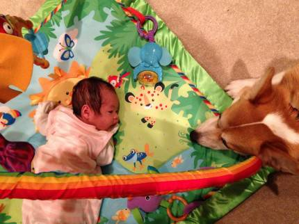 claire e il cane wilbur