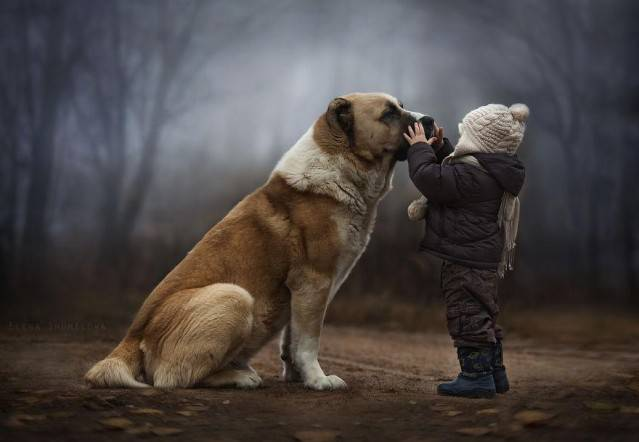 bimbo e cane foto
