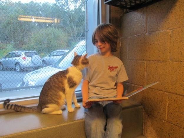 Un bambino e un gatto si guardano