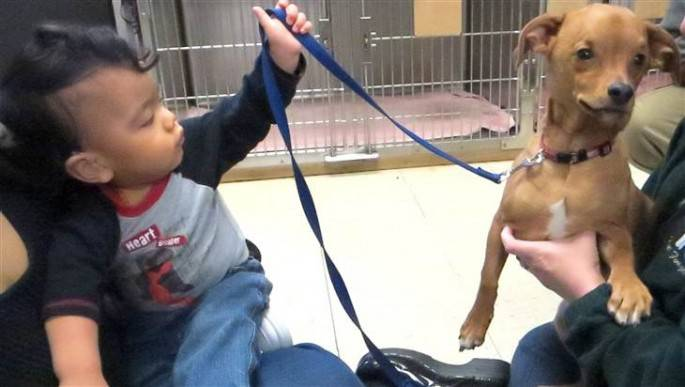 cane e bimbo con idrocefalo
