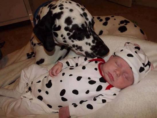 bimbo e cane dalmata