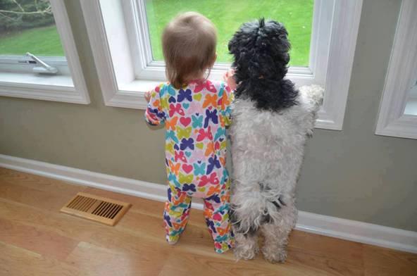 cane e bimbo alla finestra