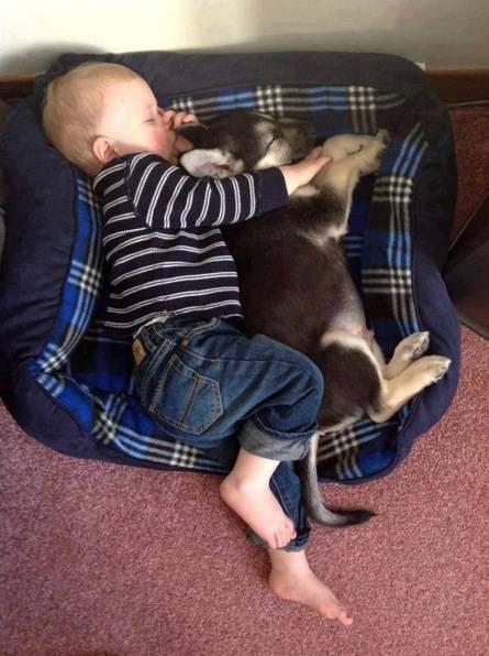 cane e bimbo dormono