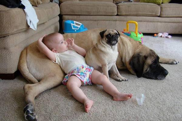 bimbo steso sul cane