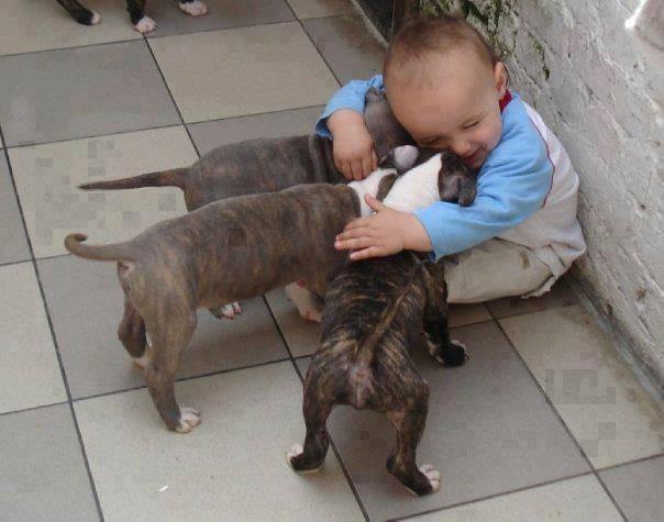 bimbo abbraccia cani