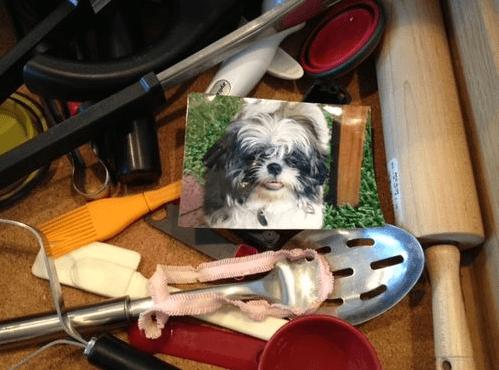 foto cane con mattarelli e cucchiai
