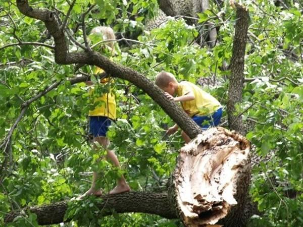 Bambini sull'albero