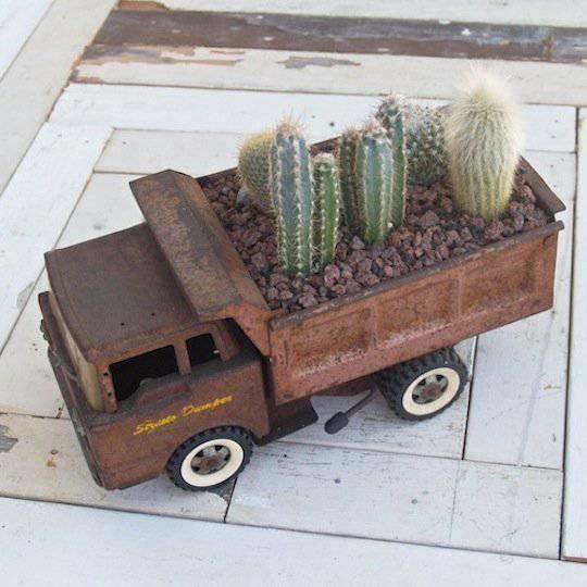 camion porta piante grasse