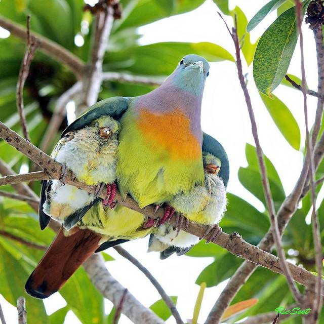 uccello colorato