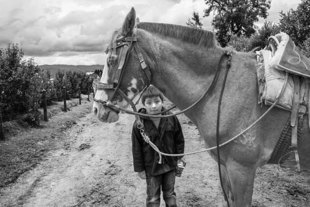 bimbo con cavallo