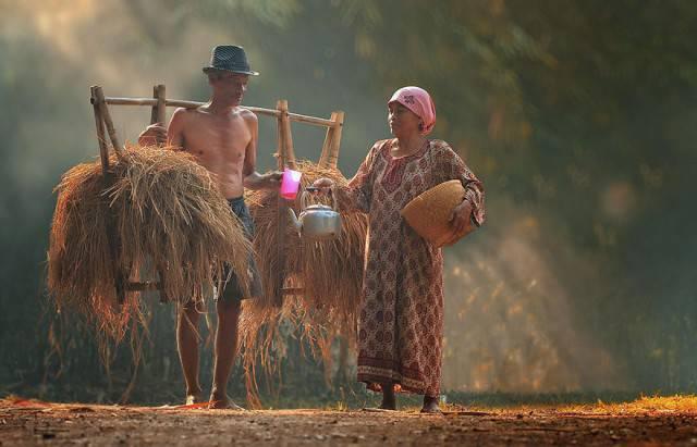 donna e bue in indonesia
