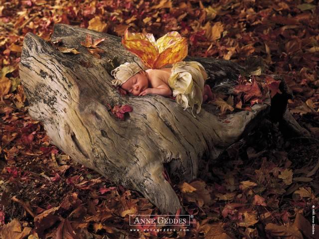 bimbo dorme su un tronco