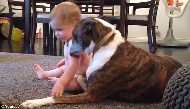 bimba leccata dal cane