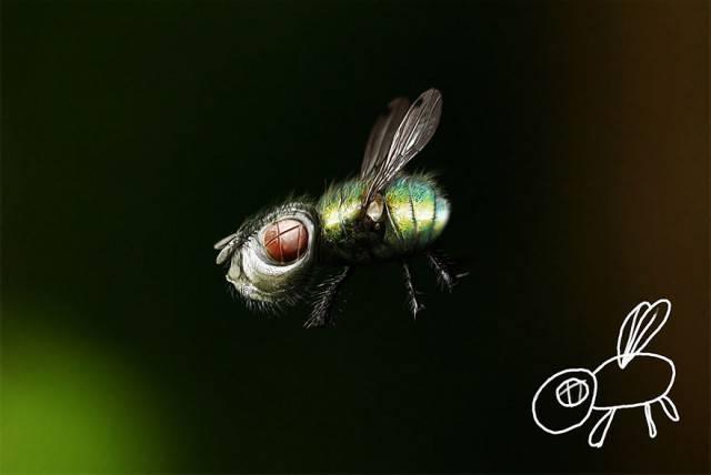 insetto disegnato