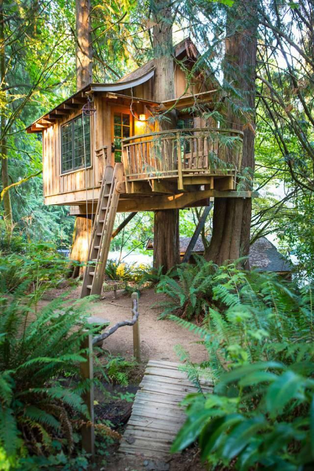 casa sull albero washington