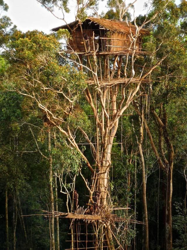 casa sull albero provincia papua