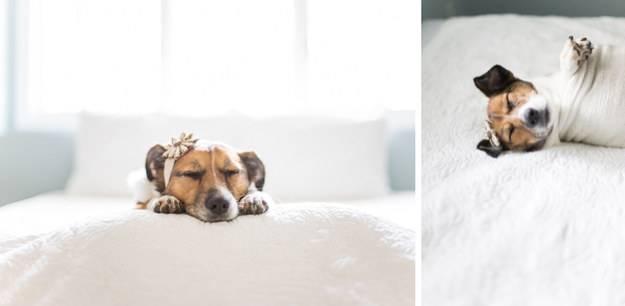 cane dorme con coroncina in testa
