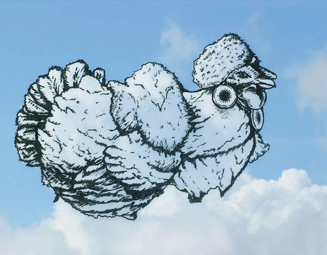 gallo nuvola