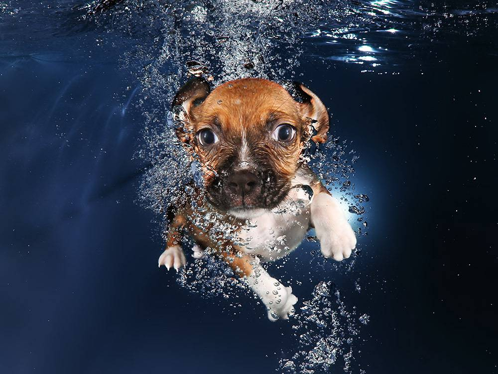 cani sott'acqua