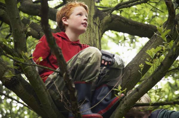 bambino su un albero