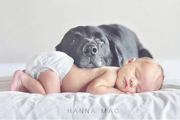 cane grigio e bebè