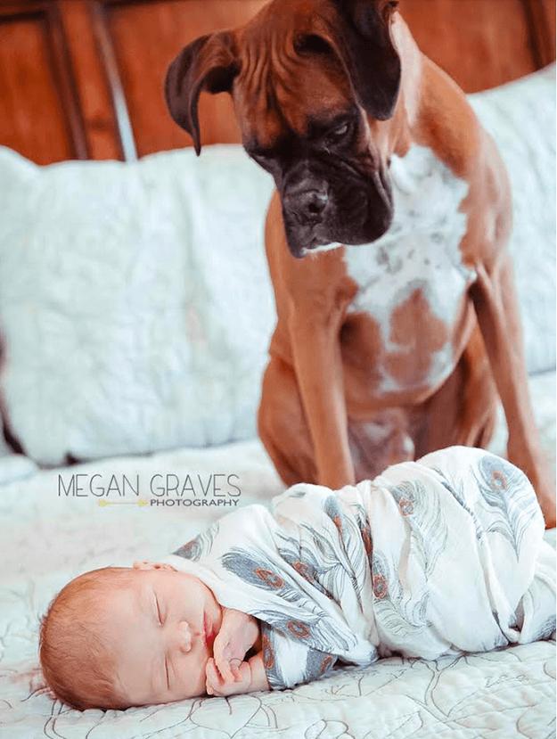 bimbo avvolto coperta e cane