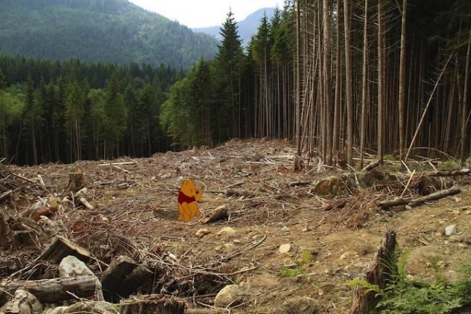 Winny Pooh senza foresta