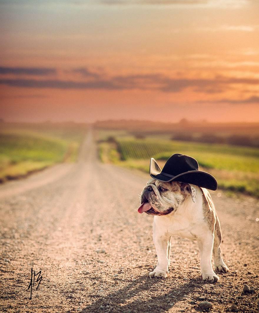 bulldog col cappello