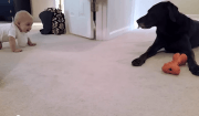 cane e bimbo