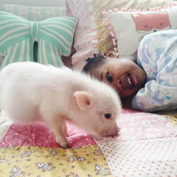 bimba gioca con maiale