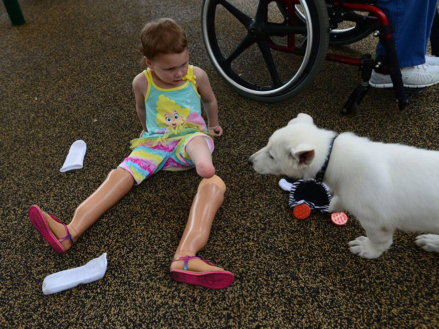 3-year-old-girl-amputated-legs-puppy-without-paw-sapphyre-johnson-lt-dan-3