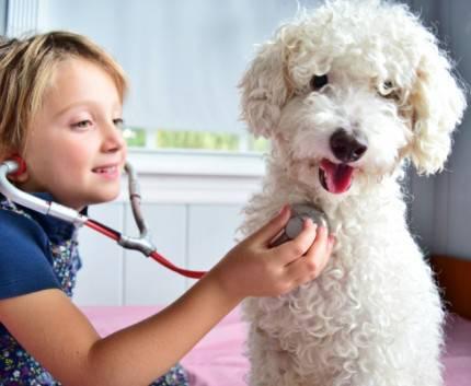 piccola veterinaria