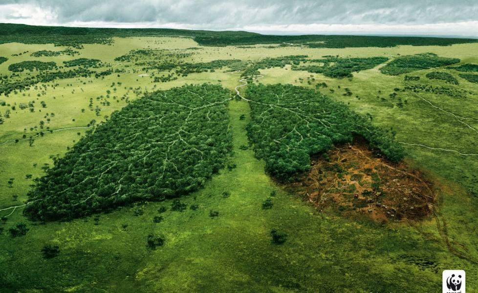 polmone verde