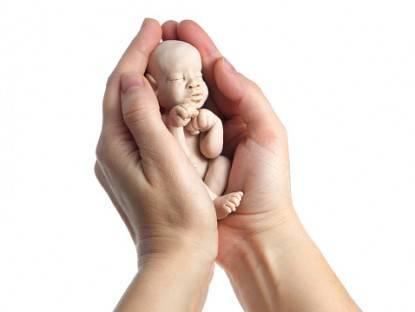 embrione modificato geneticamente