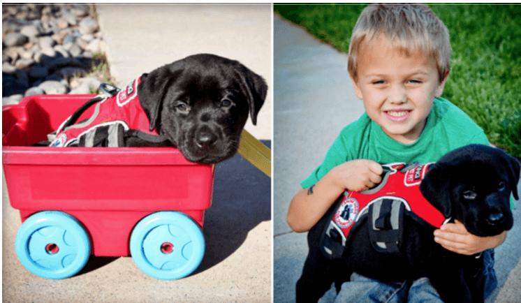 bimbo e cane
