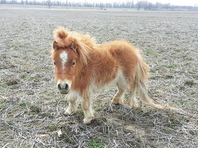 criniera cavallo