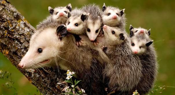 funny-animal-motherhood-photos-cats-dogs-pet-moms-10-5767d6b6ee9ef__605