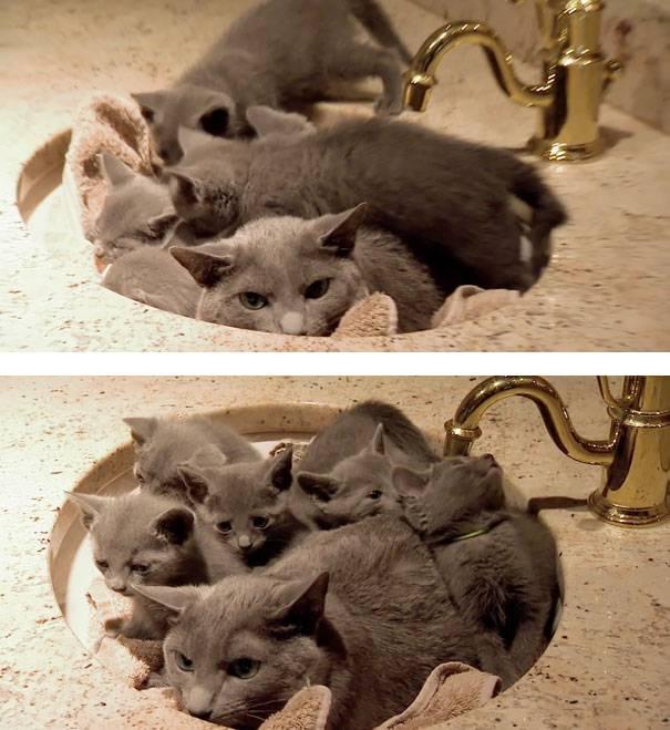 funny-animal-motherhood-photos-cats-dogs-pet-moms-17-5767ded9cae95__605 (1)