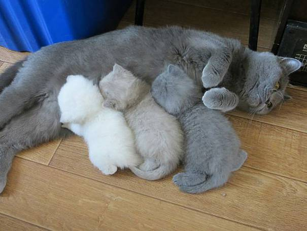 funny-animal-motherhood-photos-cats-dogs-pet-moms-3-5767d6a360b57__605