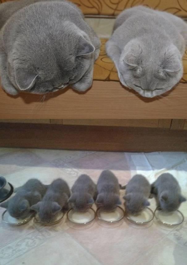 funny-animal-motherhood-photos-cats-dogs-pet-moms-6-5767d6ac272c0__605