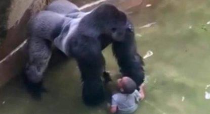 morte del gorilla