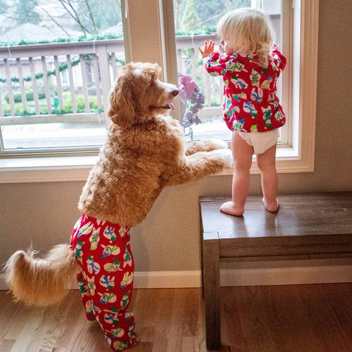 foster-child-labradoodle-dog-book-buddy-reagan-14