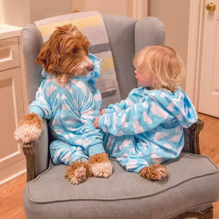 foster-child-labradoodle-dog-book-buddy-reagan-16