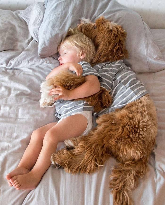 foster-child-labradoodle-dog-book-buddy-reagan-17