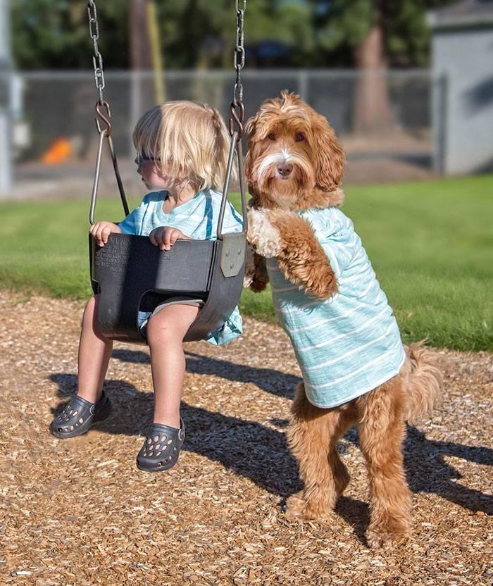 foster-child-labradoodle-dog-book-buddy-reagan-18