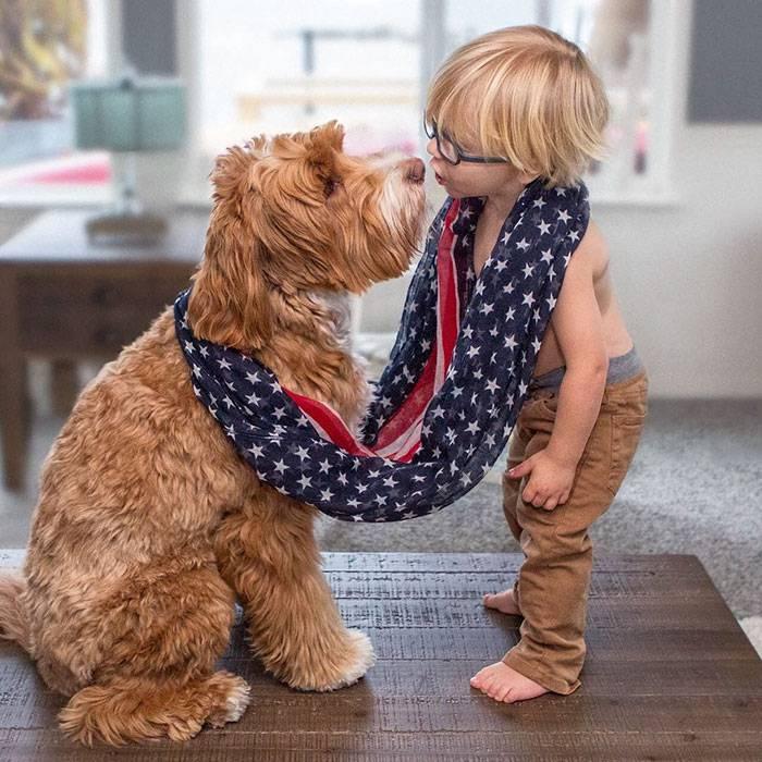 foster-child-labradoodle-dog-book-buddy-reagan-19